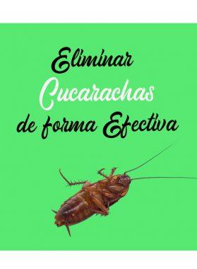 Cucarachas: Eliminarlas de forma efectiva